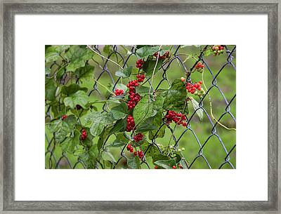 Autumn Fruit Framed Print by Joan Bertucci