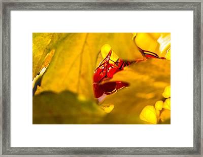Framed Print featuring the photograph Autumn Fruits - Viburnum Berries by Alexander Senin
