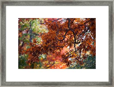 Autumn Fury Framed Print