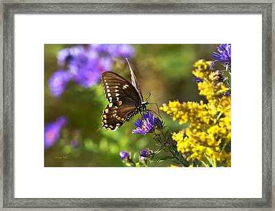 Autumn Garden Butterfly Framed Print by Christina Rollo
