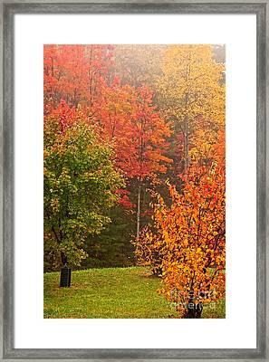 Autumn Gathering Framed Print by Dan Carmichael