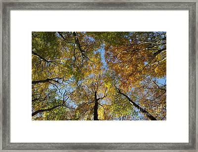 Autumn Glory Framed Print by Tim Gainey