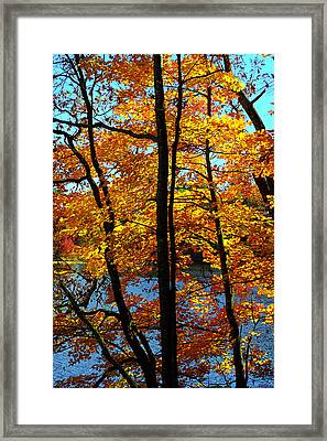 Autumn Gold Framed Print by Alan Lenk