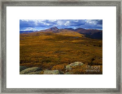 Autumn Gold Framed Print by Barbara Schultheis