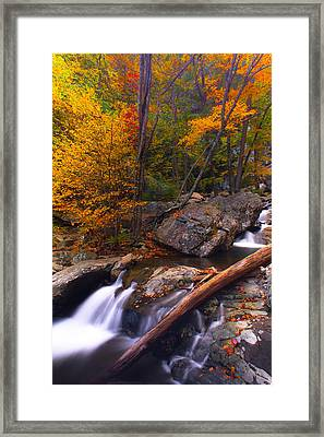 Autumn Gold Framed Print by Everett Houser