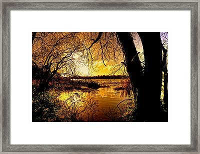 Autumn Gold Framed Print by Kim Shatwell-Irishphotographer