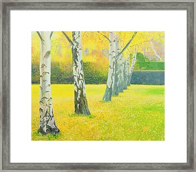 Autumn Gold Framed Print by William Ireland