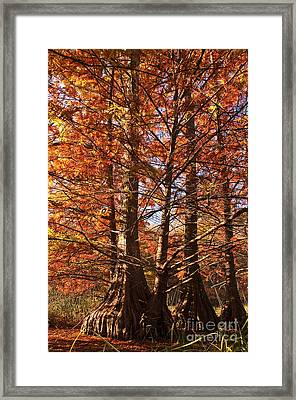 Framed Print featuring the photograph Autumn Grandeur At Lake Murray by Tamyra Ayles