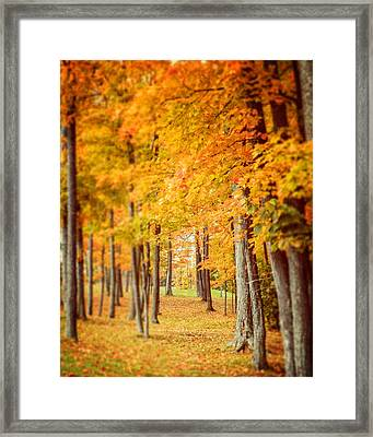 Autumn Grove  Framed Print by Lisa Russo