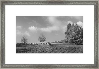 Autumn Hay Bw Framed Print