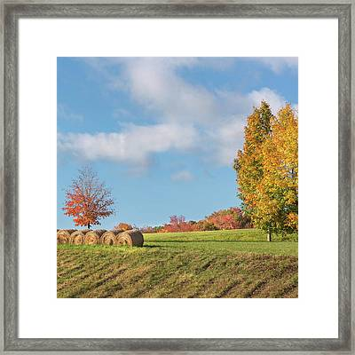 Autumn Hay Square Framed Print by Bill Wakeley