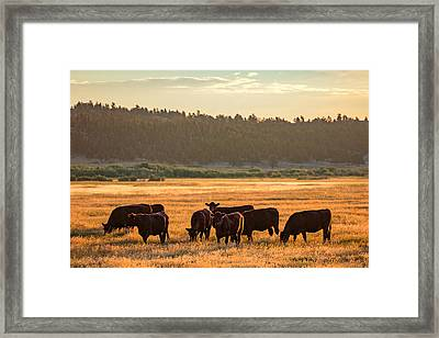 Autumn Herd Framed Print by Todd Klassy