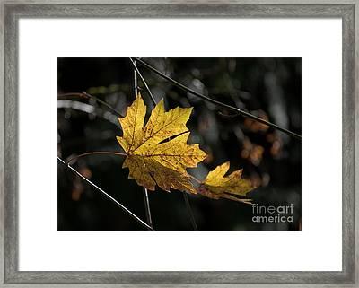 Autumn Highlight Framed Print by MaryJane Armstrong