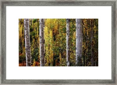 Autumn In A Jungle Framed Print
