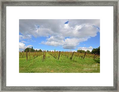 Autumn In A Vineyard In Tuscany Italy Framed Print by DejaVu Designs