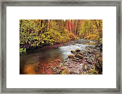 Autumn In An Oregon Rain Forest  Framed Print