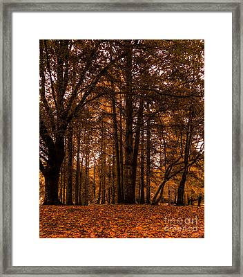 Autumn In Colligan Wood Framed Print