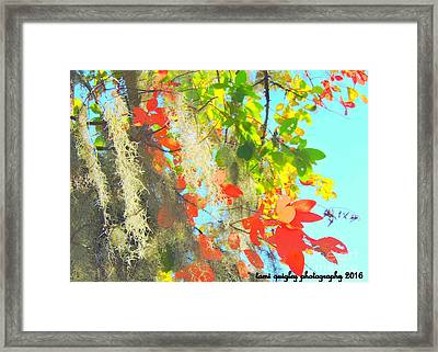 Autumn In Dixie  Framed Print