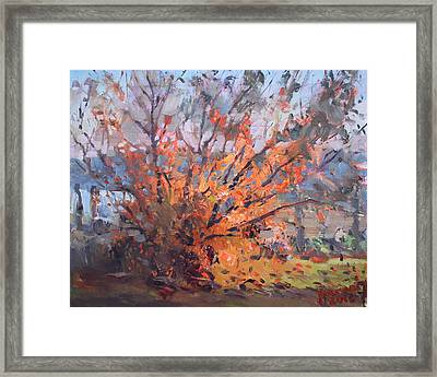 Autumn In Late Evening Framed Print by Ylli Haruni