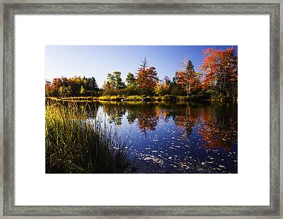 Autumn In Maine Usa Framed Print by Vishwanath Bhat