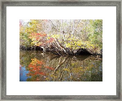 Autumn In Moyock Framed Print