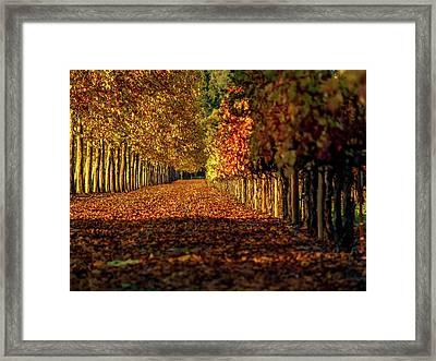 Autumn In Napa Valley Framed Print by Bill Gallagher