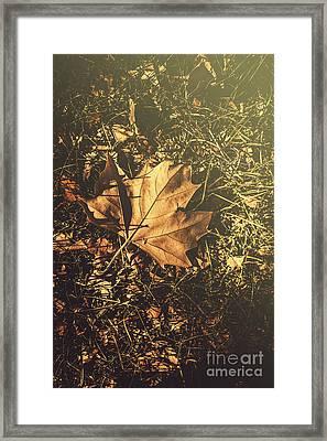 Autumn In Narrandera Framed Print by Jorgo Photography - Wall Art Gallery