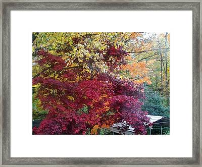 Autumn In October Framed Print by Misty VanPool
