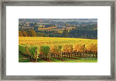 Autumn In Oregon Wine Country Framed Print
