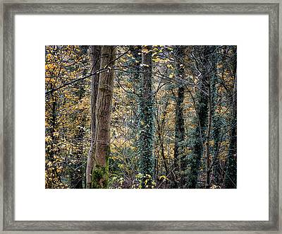 Autumn In Rawtenstall Woods Framed Print by Philip Openshaw