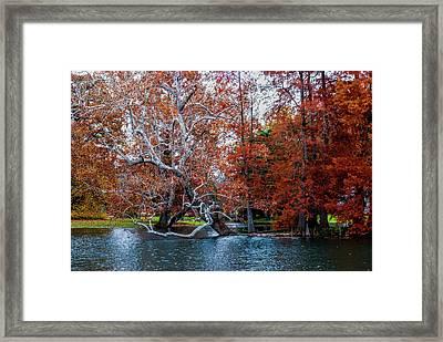 Autumn In Spring Grove Framed Print