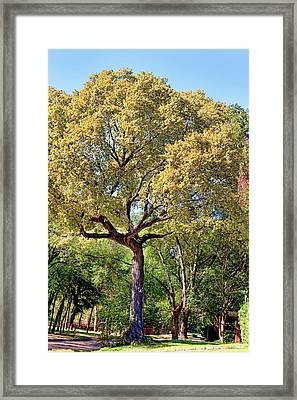 Autumn In Summer Framed Print by Joan Bertucci