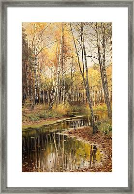 Autumn In The Birchwood Framed Print