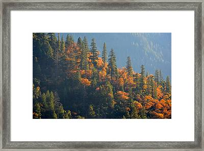 Autumn In The Feather River Canyon Framed Print by AJ Schibig