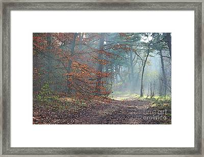 Autumn In The Forest, Painting Like Photograph Framed Print