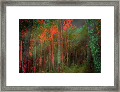 Framed Print featuring the photograph Autumn In The Magic Forest by Mimulux patricia no No