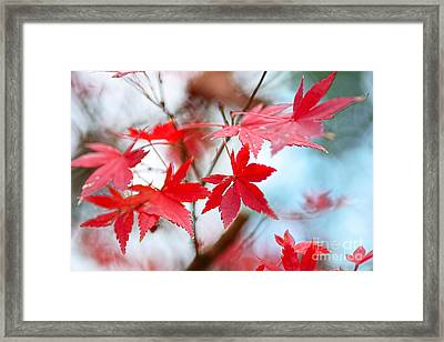 Autumn In The Mist By Kaye Menner Framed Print by Kaye Menner