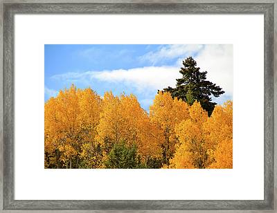 Autumn In The Owyhee Mountains Framed Print