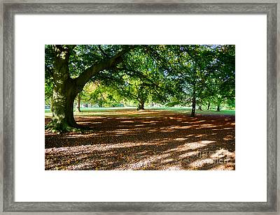 Autumn In The Park Framed Print by Colin Rayner