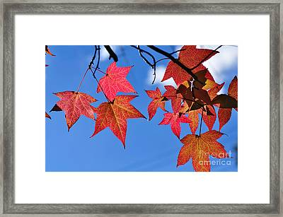 Autumn In The Sky Framed Print by Kaye Menner