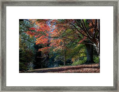 Autumn In The South Framed Print by Dale Powell