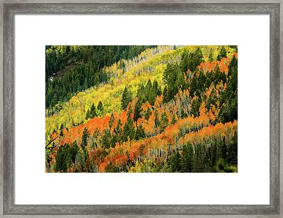 Autumn In The Uintas Framed Print by TL Mair