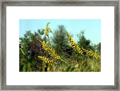Autumn In The Wind Framed Print