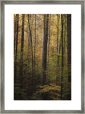 Autumn In The Woods Framed Print by Andrew Soundarajan