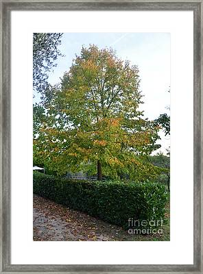 Autumn In Tuscany Italy With Leaves Changing Framed Print by DejaVu Designs