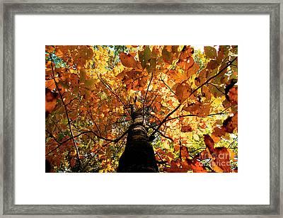 Autumn Is Glorious Framed Print