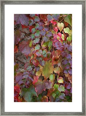Autumn Ivy Framed Print by Jessica Rose