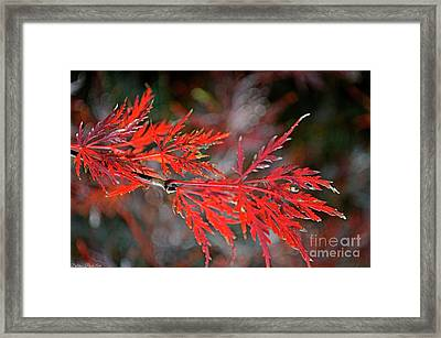 Autumn Japanese Maple Framed Print by Debbie Portwood