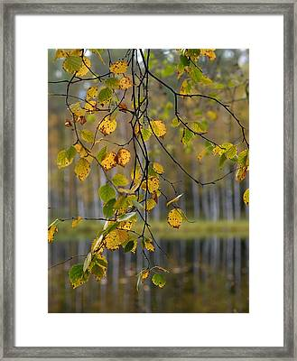 Autumn  Framed Print by Jouko Lehto