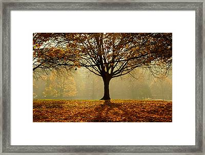 Autumn Framed Print by Kobby Dagan